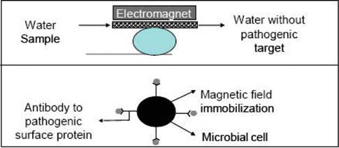Magnetic separation.jpg