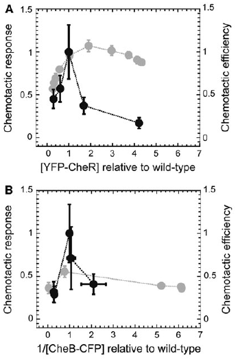 Figure 2: As the relative concentration of CheR and CheB are adjusted, the chemotactic response and efficiency are altered.