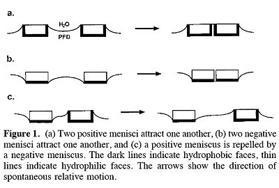 Modeling Menisci and Capillary Forces from the Millimeter to