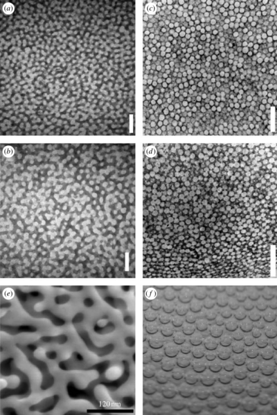 Development of colourproducing betakeratin nanostructures in avian feather barbs  SoftMatter